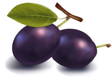 Two plums with leaves. Royalty Free Stock Photography