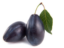 Two plums Stock Photo