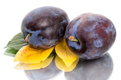 Two plums on a white Stock Image
