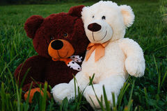 Two plush bears on a green glade Royalty Free Stock Images