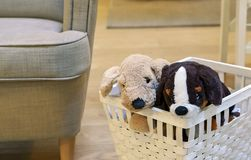 Two plush puppies in a white wicker basket. Soft toy puppy royalty free stock image