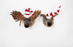 Two plush reindeer with santa hats hanging on a wooden wall for Royalty Free Stock Photos