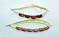 Two pods of beans Stock Image