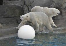 Two polar bears Royalty Free Stock Photos
