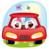 Two Polar Bears in a car Royalty Free Stock Photo