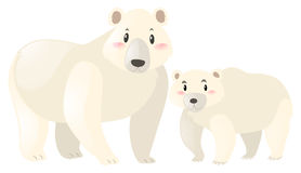 Two polar bears on white background Royalty Free Stock Images