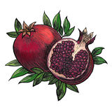 Two pomegranates on a white background Stock Photos
