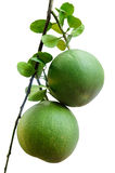 Two pomelo fruit Stock Image
