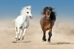 Two pony run Royalty Free Stock Images