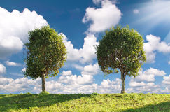 Two poplar trees. Royalty Free Stock Image