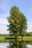 Two poplar on water Royalty Free Stock Photography