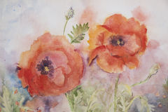 Two poppies painted with watercolor Royalty Free Stock Photos