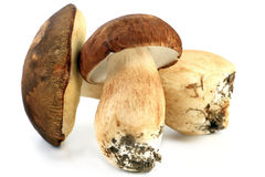 Two porcini mushrooms Stock Images