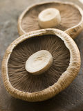 Two Portobello Mushrooms Stock Images
