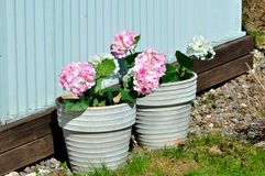 Two pot with flowers outdoor Royalty Free Stock Photography
