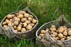 Two potato baskets Stock Images