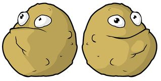 Two potatoes Royalty Free Stock Image