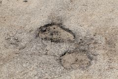 Two potholes. On an asphalt road. photo close-up, top view Royalty Free Stock Image