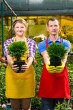Two pots with a green tree in the hands of workers Royalty Free Stock Photos