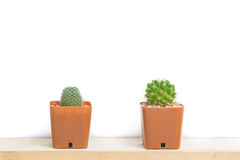 Two potted cactus Royalty Free Stock Photography