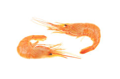 Two prawns Royalty Free Stock Images