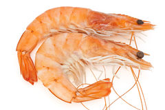 Two prawns Stock Photo