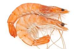 Two prawns. Two fresh shrimps isolated on white background Stock Photo