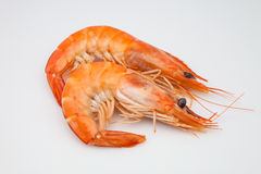 Two prawns Royalty Free Stock Image