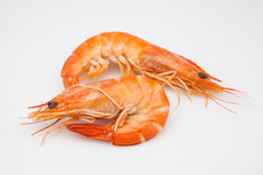 Two prawns. Cooked ready to eat royalty free stock image