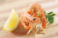 Two prawns on a shell Royalty Free Stock Image