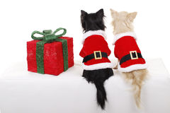 Two pretty dogs in christmas costume from rear. Two Pretty dogs in santa costume from the back beside a christmas gift stock image