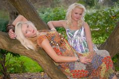 Two pretty girl friends posing on trees Stock Image
