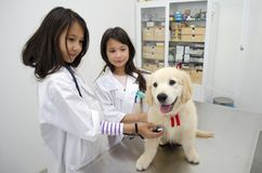 Pretty girls Pretending to be veterinarians. Two pretty little girls pretending to be veterinarians treating a puppy golden retriever Stock Photography