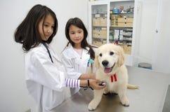 Pretty girls Pretending to be veterinarians. Stock Photography