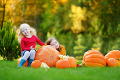 Two pretty little sisters having fun together on a pumpkin patch Royalty Free Stock Image