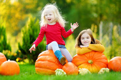 Two pretty little sisters having fun together on a pumpkin patch Royalty Free Stock Photo