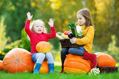 Two pretty little sisters having fun together on a pumpkin patch Stock Image