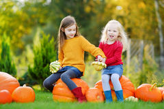 Two pretty little sisters having fun together on a pumpkin patch Stock Photography