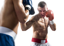 Two professionl boxers are fighting on the white Royalty Free Stock Image