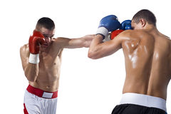 Two professionl boxers are fighting on the white Stock Image