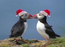 Two puffins Stock Photos