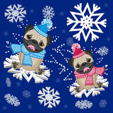 Two Pug Dogs Royalty Free Stock Image