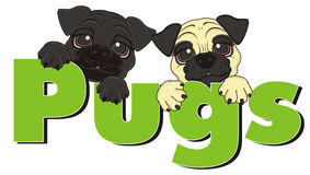 Two pugs with word. Two puppies of pugs peek up from green word pugs Stock Photos