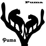Two pumas on tree, silhouette on white background,. Vector Royalty Free Stock Photo