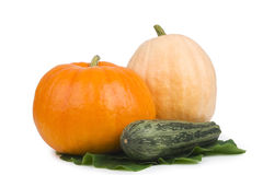 Two pumpkin and marrows. Royalty Free Stock Image