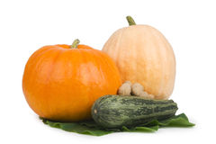 Two pumpkin and marrows. Stock Photo