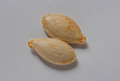 Two pumpkin seeds on the white background. Pumpkin seeds on the white background Stock Photos