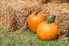 Two pumpkins Stock Photo