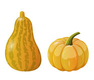 Two pumpkins Stock Image