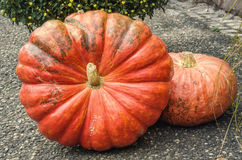 Two pumpkins on asphalt Stock Image